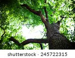 forest trees nature green wood... | Shutterstock . vector #245722315