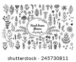 hand drawn vector flowers. can... | Shutterstock .eps vector #245730811