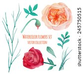 watercolor plants and roses... | Shutterstock .eps vector #245750515