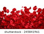 rose petals on white ground | Shutterstock . vector #245841961
