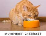 Red Cat And Bowl Of Dry Food O...