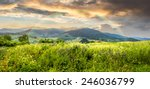 composite mountain landscape. wild flowers on meadow in mountains in morning light with rainbow - stock photo