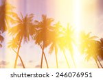 Palm Trees On Tropical Shore At ...