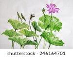 Lotus Flower Watercolor...