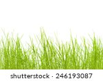 green grass | Shutterstock . vector #246193087