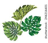 3 vector tropical palm leaves.... | Shutterstock .eps vector #246216601