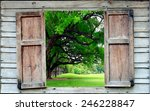 Big Tree And Old Wood Window