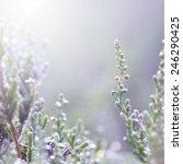 Spring Meadow Flowers