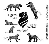 tiger stripes set vector  eps... | Shutterstock .eps vector #246420259