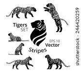 Tiger Stripes Set Vector  Eps...