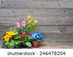 Spring Flowers  Tulips ...