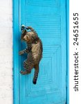 Stock photo the cat opens a door 24651655