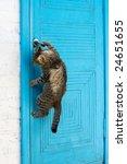 Stock photo the cat opens a door 24651655