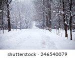 Snowing Landscape In The Park