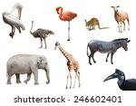 beautiful animals and birds...   Shutterstock . vector #246602401