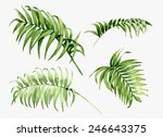 Watercolor Palm Leaves Isolate...