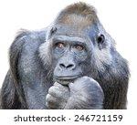 Adult Gorilla  Seemingly In...