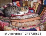 cat comfortably sleeping in a...