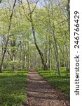 walking path in spring forest | Shutterstock . vector #246766429