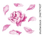 Stock photo abstract delicate pink flower and separated petals floral watercolor illustration isolated on 246797437