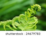 Soft abstract image of green fern with new growth.  Macro with extremely shallow dof. - stock photo