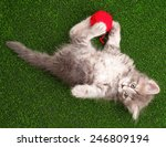 Stock photo cute grey kitten playing red clew of thread on artificial green grass 246809194