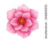 anemone pink flower decorative... | Shutterstock . vector #246820351