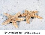Starfish Laying On The Beach
