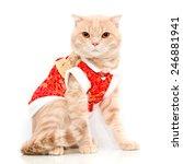 scottish fold cat | Shutterstock . vector #246881941