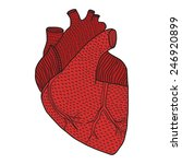 human heart hand drawn isolated ... | Shutterstock .eps vector #246920899