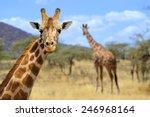Stock photo giraffe in front amboseli national park kenya 246968164