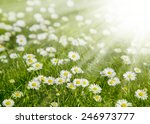 green grass and chamomile... | Shutterstock . vector #246973777