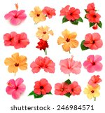 collection of colored hibiscus... | Shutterstock . vector #246984571