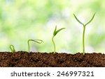 plants growing from soil  ...   Shutterstock . vector #246997321