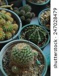 nature of cactus in pot | Shutterstock . vector #247028479