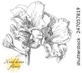 hand drawn flowers | Shutterstock .eps vector #247057819