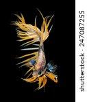 siamese fighting fish  betta... | Shutterstock . vector #247087255