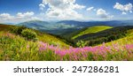 composite landscape with high wild grass and purple flowers on the top of high mountain - stock photo