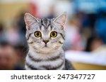 Stock photo funny cat 247347727