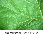 green leaf with water droplets | Shutterstock . vector #24741922