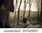 Small photo of Old man with his dog searching truffle in a forest