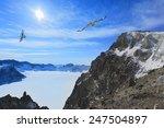 bird wheeling above snow...   Shutterstock . vector #247504897