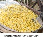 egg of silk worm | Shutterstock . vector #247504984