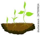 three plants growing in the... | Shutterstock .eps vector #247509814