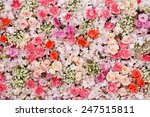 beautiful flowers background... | Shutterstock . vector #247515811