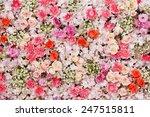 beautiful flowers background... | Shutterstock . vector #247515811
