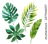 four tropical leaves. hand... | Shutterstock .eps vector #247546057