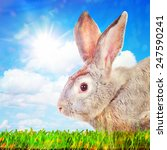 Happy rabbit on a green grass against sunny sky. - stock photo