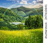 composite mountain summer landscape. pine trees on hillside meadow with wild flowers near the river in mountains with rainbow - stock photo