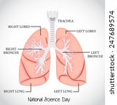 vector illustration of lungs... | Shutterstock .eps vector #247689574
